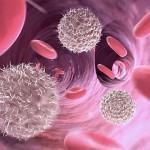 Fucoidan Immune Modulating Ability