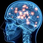 Fucoidan and Brain Health